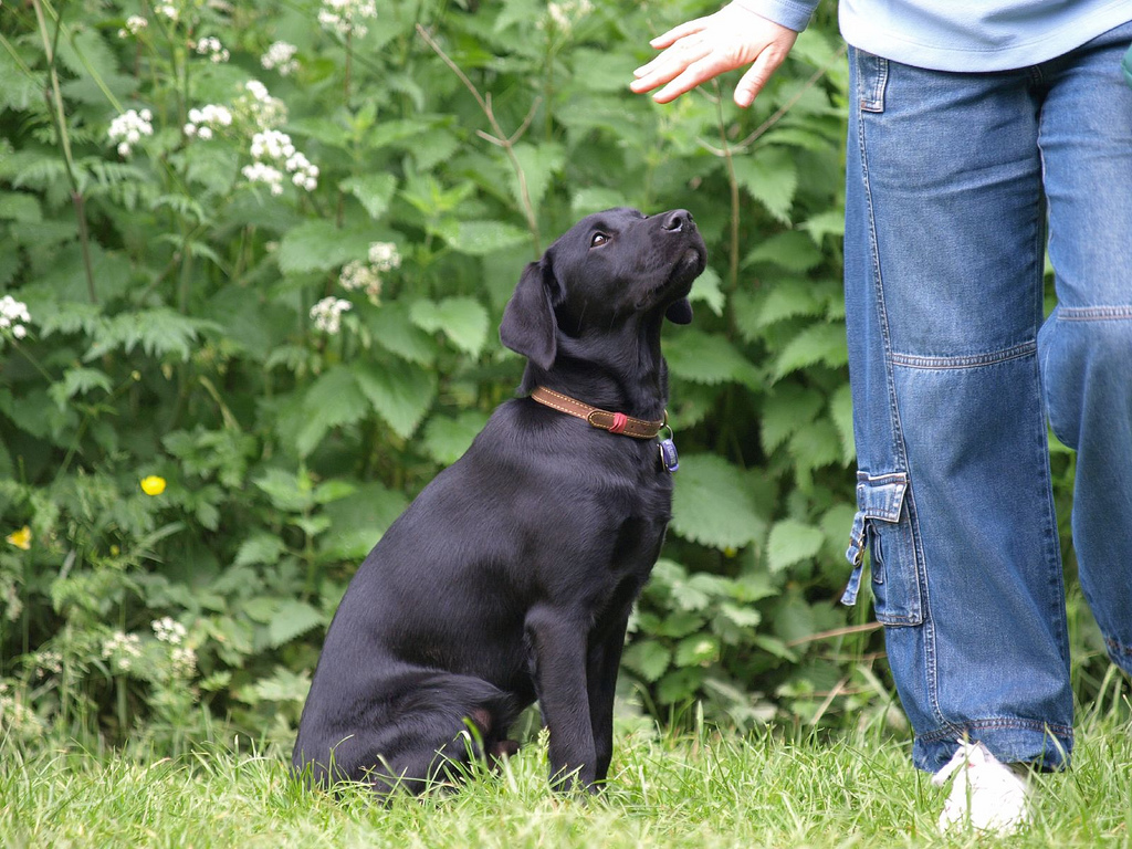 Obedience Training | The Trained Canine in New Jersey